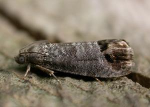 Tierkot von welchem tier ist for Kleine fliegen blumen